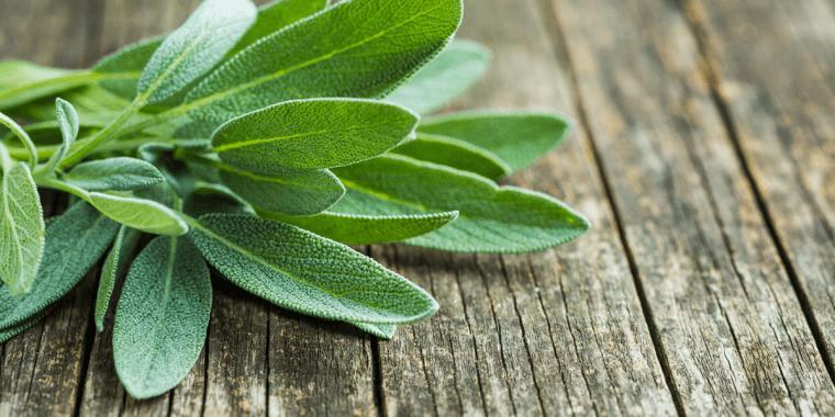 Salvia: efficace contro i sintomi della menopausa