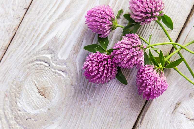 rimedi naturali per vampate in menopausa